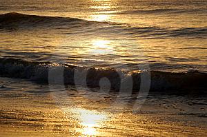 goldenwaves-thumb2092492.jpg
